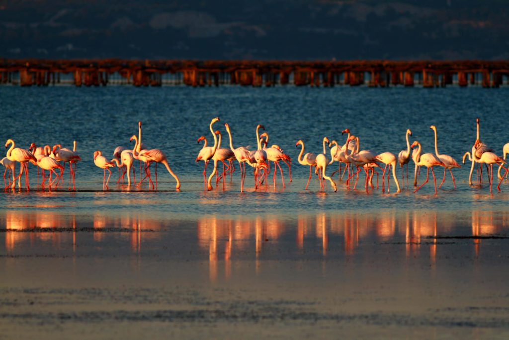 Flamingoes during a day trip